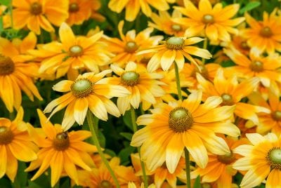 Yellow Flowers Gelbe Blumen nature summer Natur Sommer желтые цветы лето природа