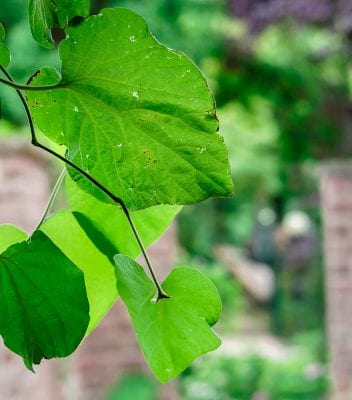Tree leaves green Baumblätter grün зелень листья природа nature Natur