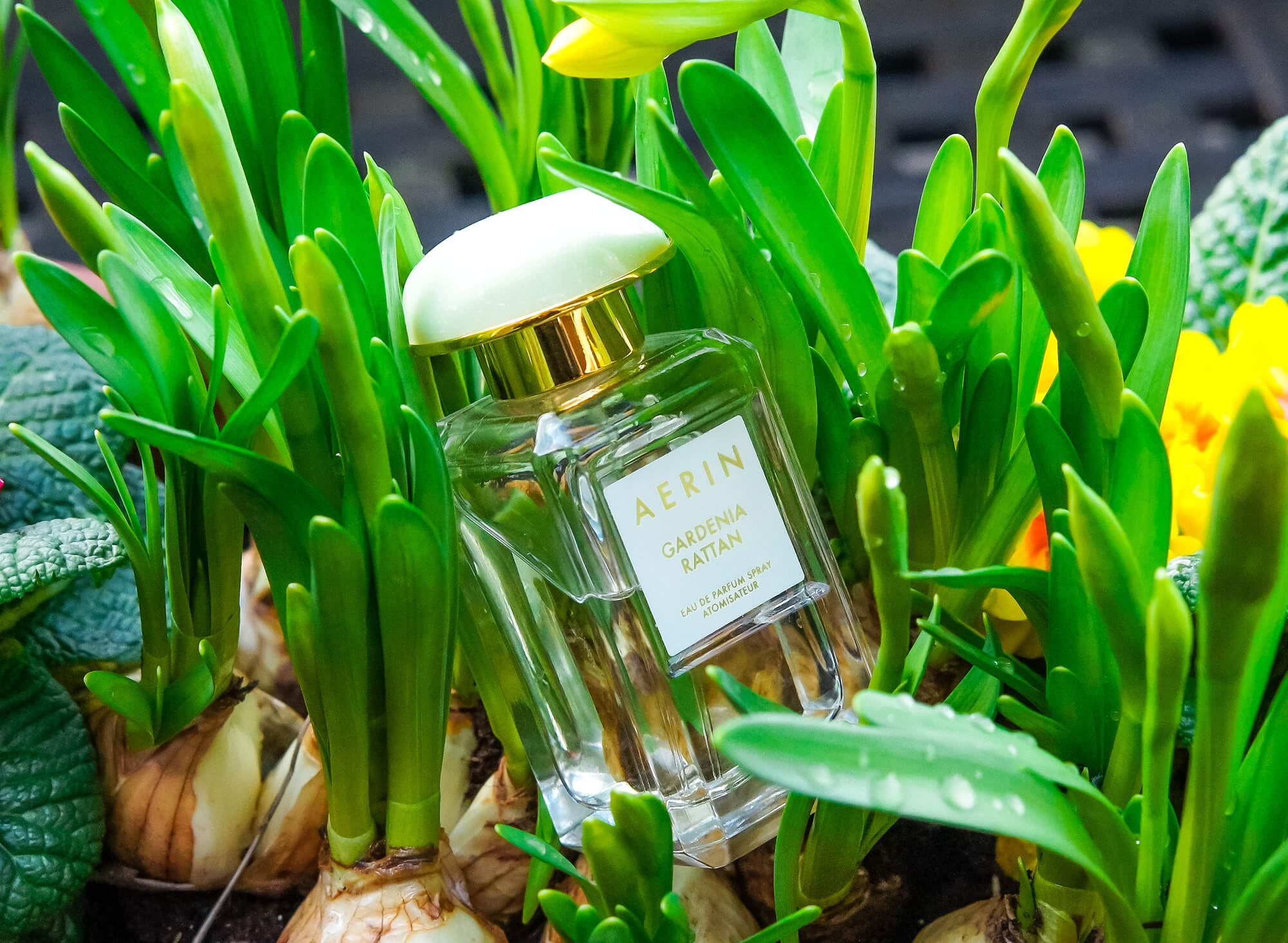 Акварельная лёгкость Aerin Gardenia Rattan