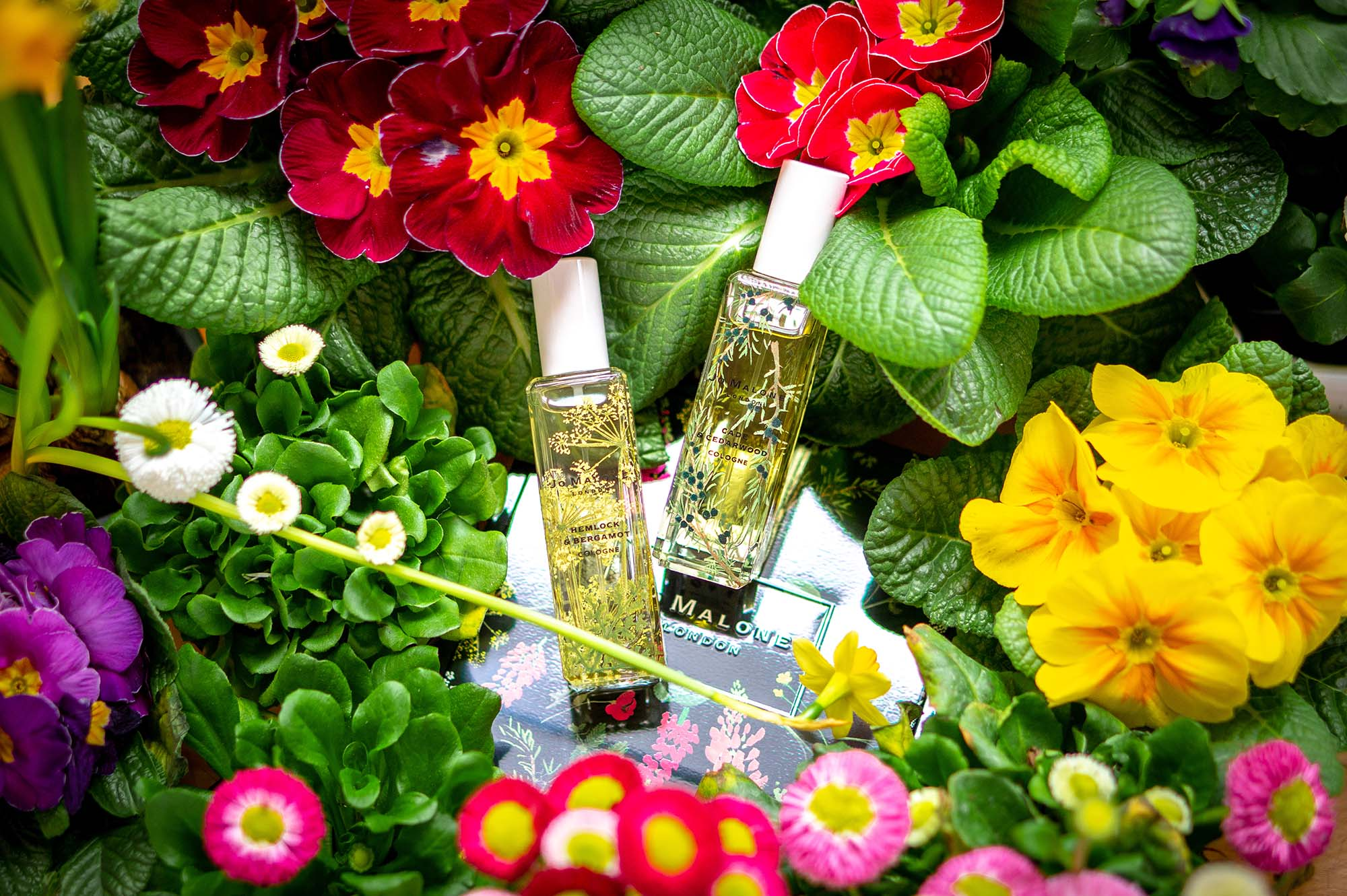 Parfümreview: komplette Wild Flowers & Weeds Kollektion von Jo Malone London