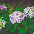 Flowers Plants Flora Nature Blumen Pflanzen Natur растения цветы природа