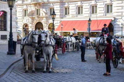 Vienna horse carriage Wien Pferdekutsche Вена конная повозка лошади Pferde Horses